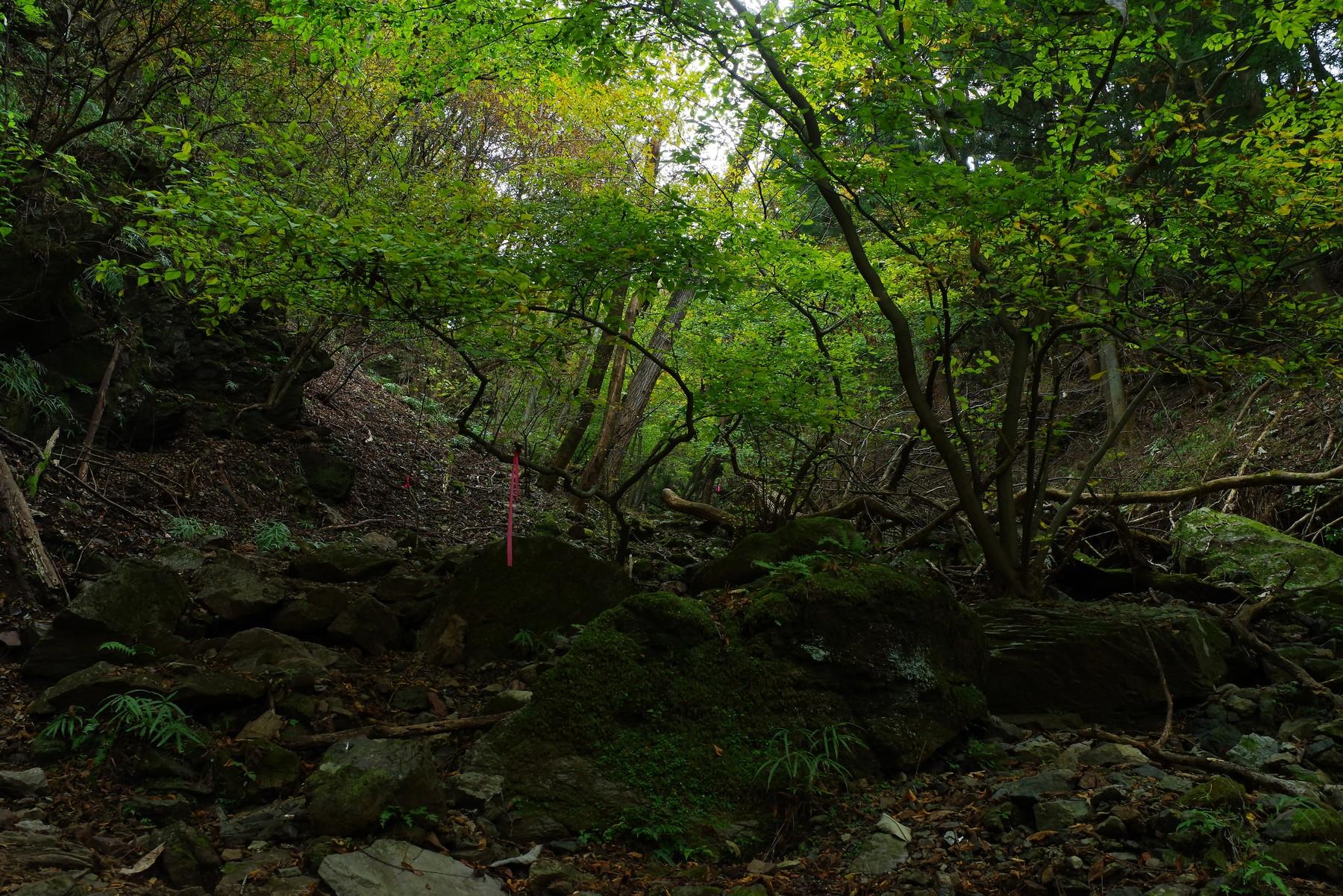 深い森に囲まれた埼玉県横瀬町にある渓谷の作例写真