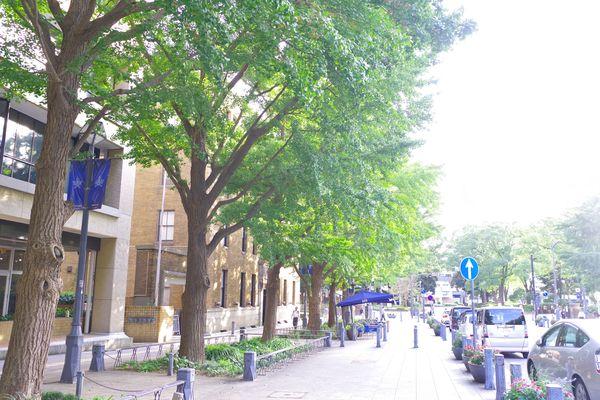 新緑の日本大通りの作例写真