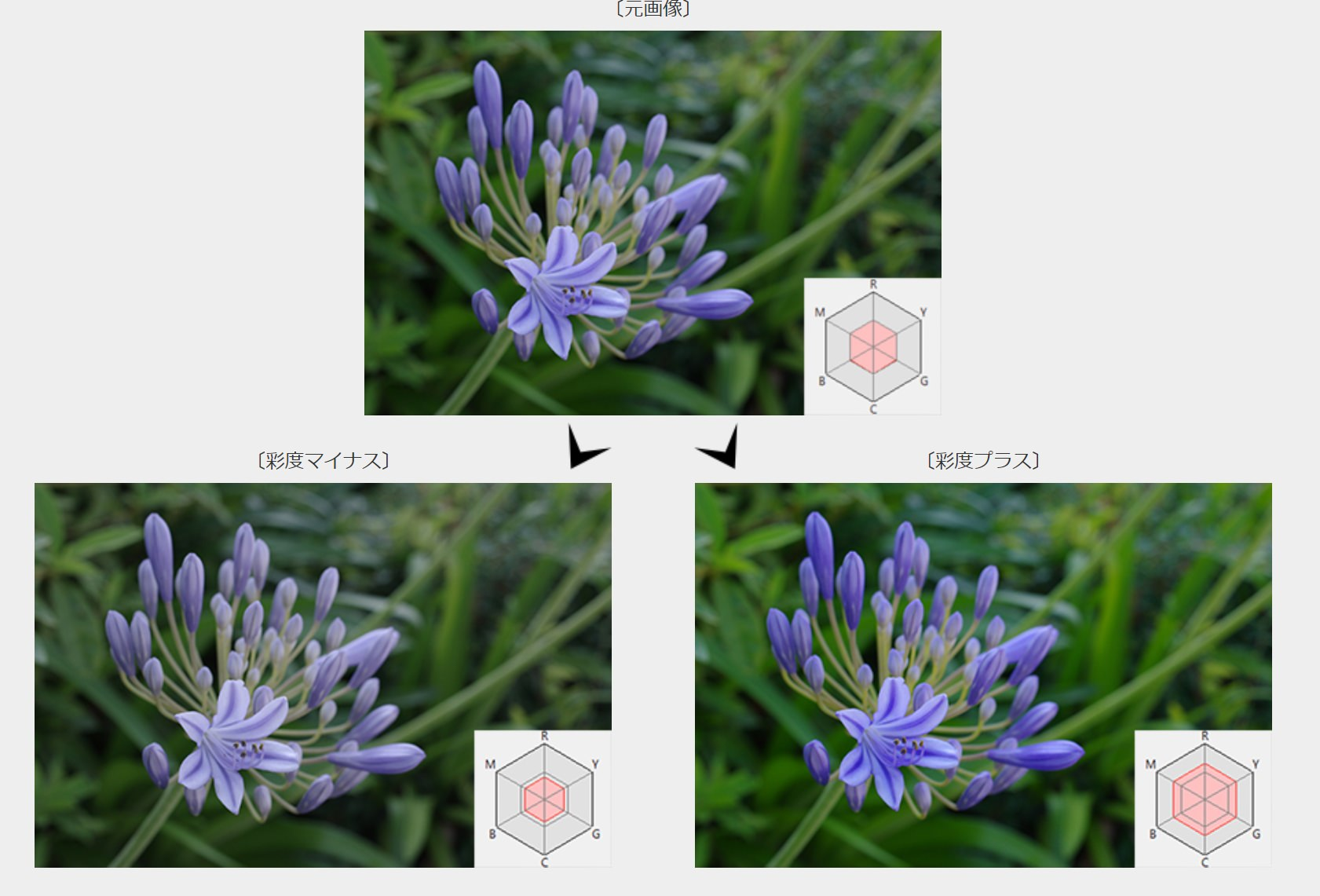 pentax公式の彩度の画像