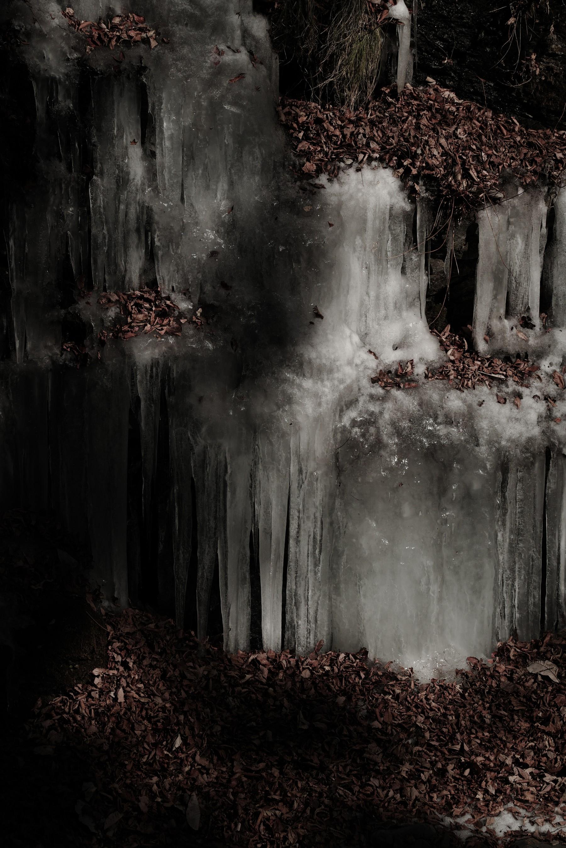 枯れ葉と氷の作例写真