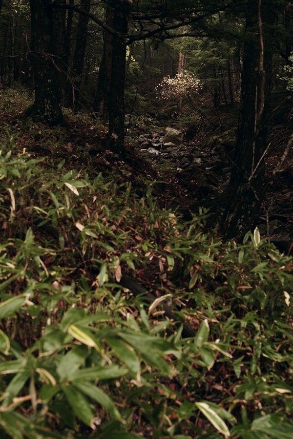 光住まう森の作例写真