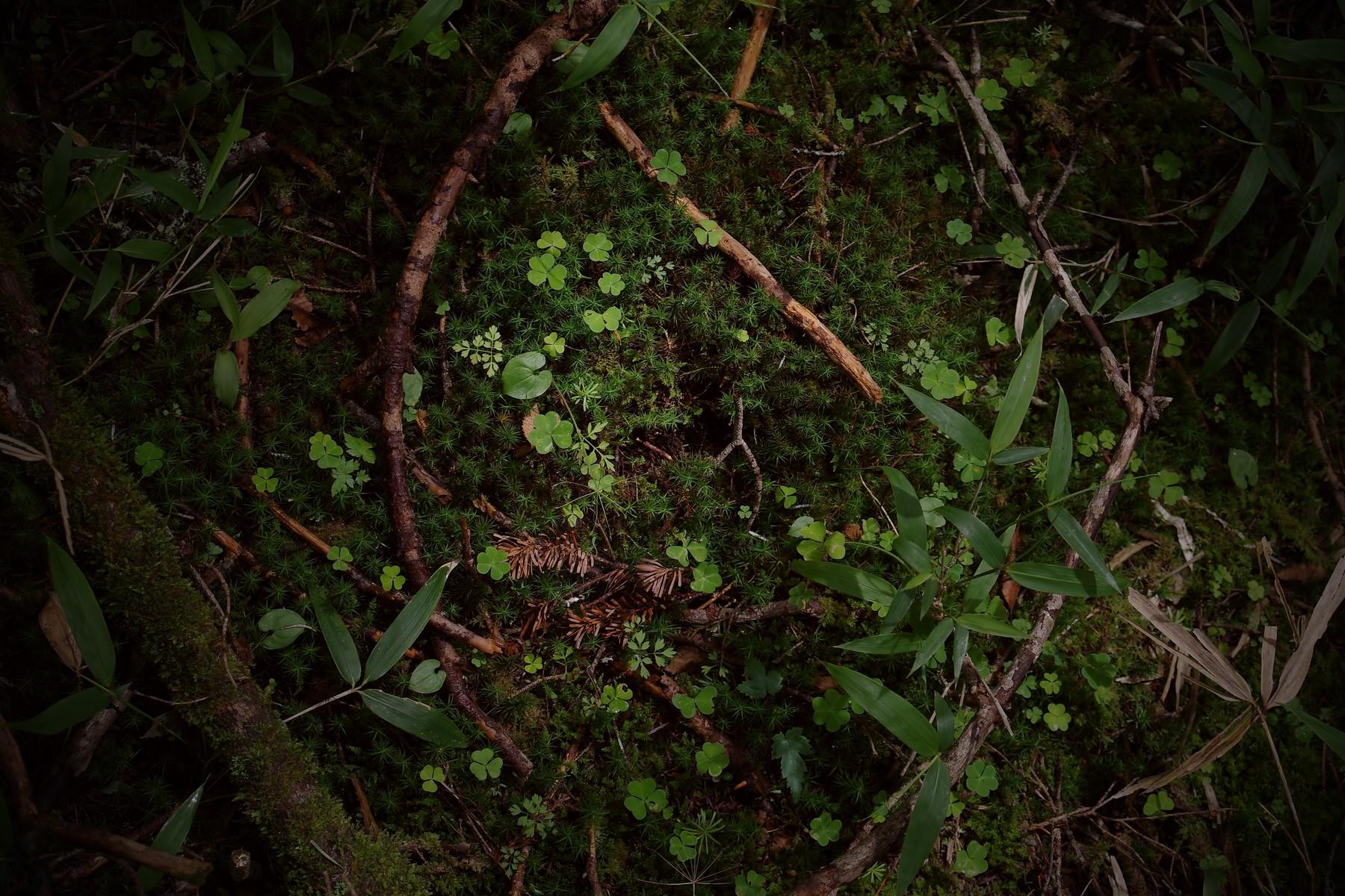 湿地の緑の作例写真