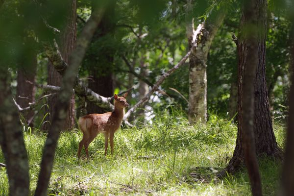 森の鹿さんの作例写真