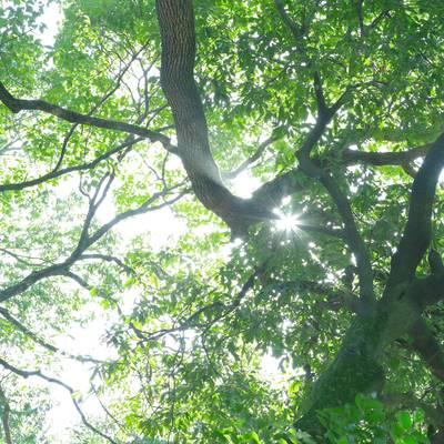 新緑と木漏れ日の作例写真